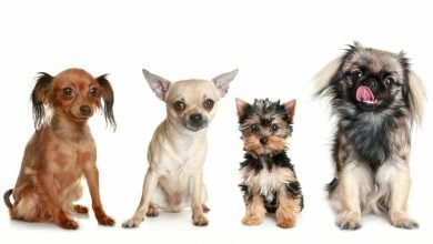 small dog breeds