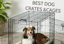 best dog crate