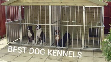 best dog kennels