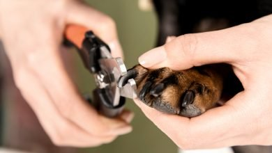 cut dog nails