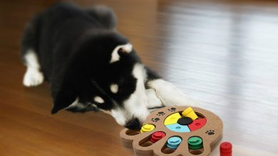 Puzzle for Your Dog