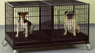 Stackable Dog Crates
