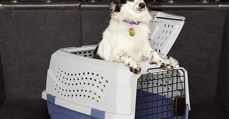 Plastic VS Metal Dog Crates