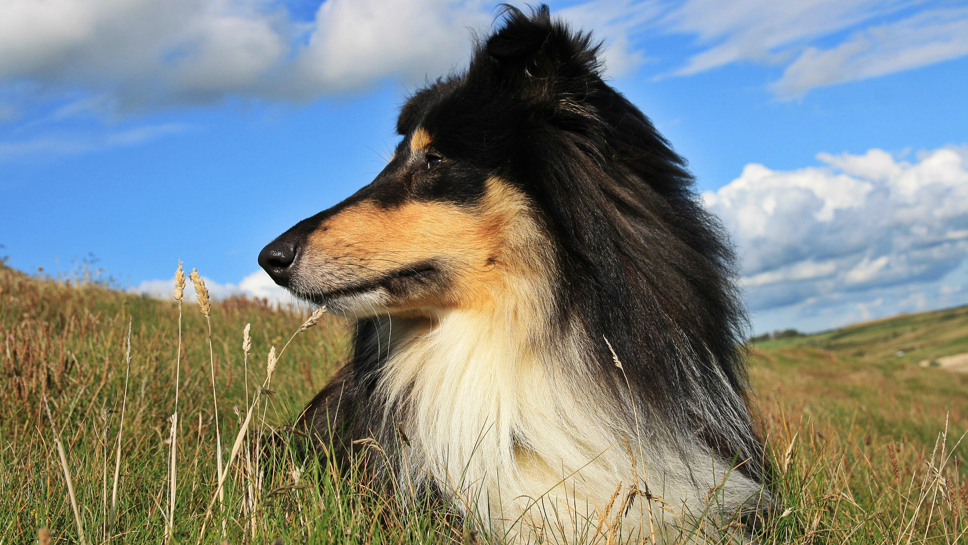 Best Dog Breeds For Families That Work